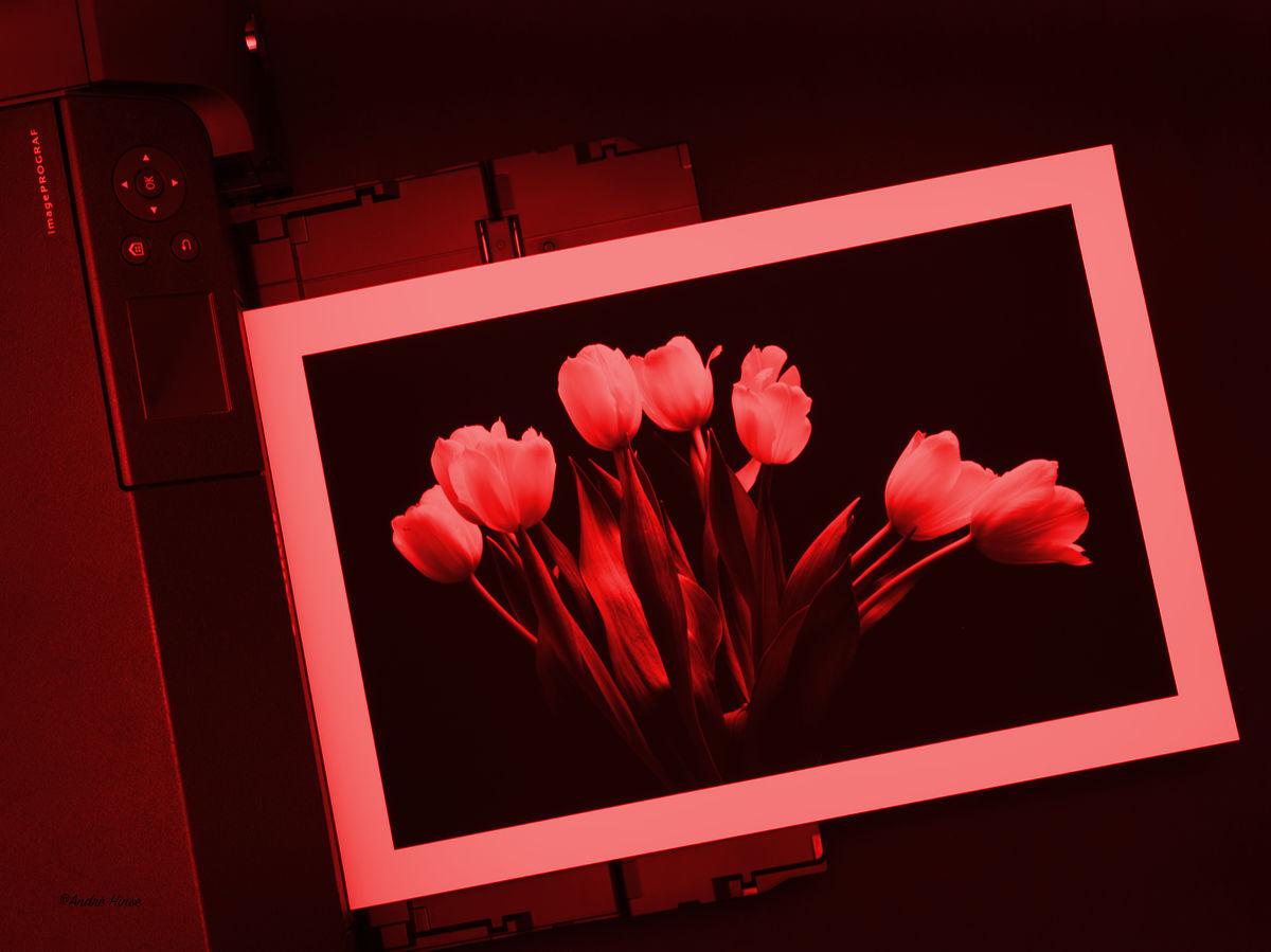 Canon PRO Drucker als digitale Dunkelkammer